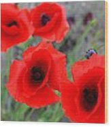 Poppies Of Stone Wood Print by Empty Wall