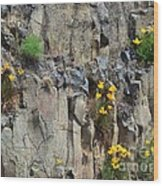 Poppies On The Cliff Wood Print