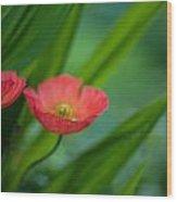 Poppies Vibrance Wood Print