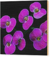 Poppin Pink Petals Wood Print