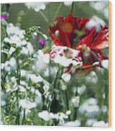 Poppy And White Flowers Wood Print