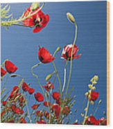 Poppy Field Wood Print by Ayhan Altun