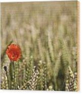 Poppy Flower In Field Of Wheat Wood Print by John Short