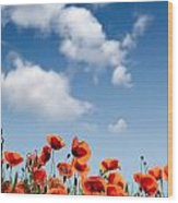 Poppy Flowers 04 Wood Print
