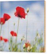 Poppy Flowers 06 Wood Print