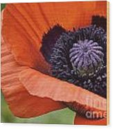Poppy For Peace Wood Print