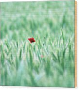 Poppy In Wheat Field Wood Print