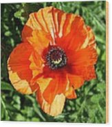 Poppy Blossom Wood Print