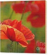 Poppy Love 2 Wood Print
