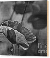 Poppy Love Wood Print
