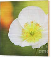 Poppy Of Peace Wood Print