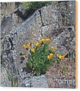 Poppy On The Rocks Wood Print