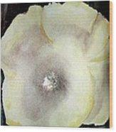 Poppy Pearl  Wood Print