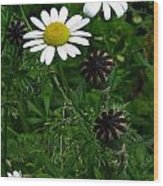 Poppy Pods And Daisy Petals Wood Print