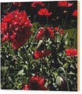 Poppy Pompom Wood Print