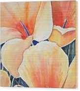 Poppy Song Wood Print by Regina Ammerman
