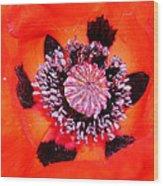Poppy's Heart Wood Print