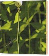 Poppyseed Bug Wood Print