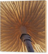 Porcelain Mushroom Oudemansiella Mucida Wood Print