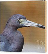 Portait Of A Little Blue Heron Wood Print