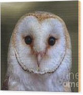 Portrait Of A Barn Owl Wood Print