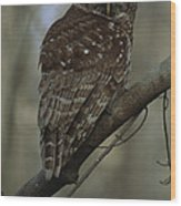 Portrait Of A Barred Owl Perched Wood Print