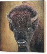 Portrait Of A Buffalo Wood Print by Tamyra Ayles