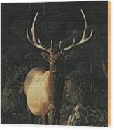 Portrait Of A Bull Elk With Large Wood Print by Michael S. Quinton