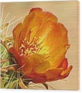 Portrait Of A Cactus Flower Wood Print