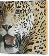 Portrait Of A Captive Jaguar Panthera Wood Print