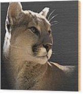 Portrait Of A Cat Wood Print