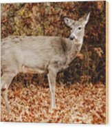 Portrait Of A Deer Wood Print by Kathy Jennings
