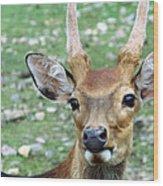 Portrait Of A Deer Wood Print