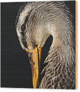 Portrait Of A Duck Poster Wood Print