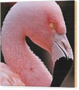 Portrait Of A Flamingo Wood Print