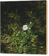 Portrait Of A Flower Wood Print