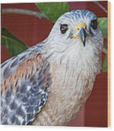 Portrait Of A Hawk Wood Print