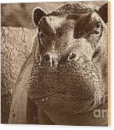 Portrait Of A Hippo Wood Print