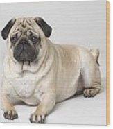 Portrait Of A Pug Dog Wood Print