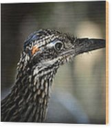 Portrait Of A Roadrunner  Wood Print