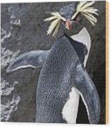 Portrait Of A Rockhopper Penguin Wood Print by Kent Kobersteen