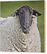 Portrait Of A Sheep Wood Print