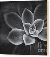 Portrait Of A Succulent Wood Print