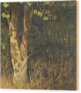 Portrait Of A Tree Trunk Wood Print
