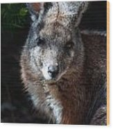 Portrait Of A Wallaby Wood Print
