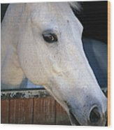 Portrait Of A White Horse Looking Wood Print