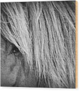 Portrait Of A Wild Horse Wood Print