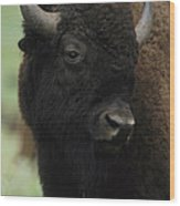 Portrait Of An American Bison Wood Print