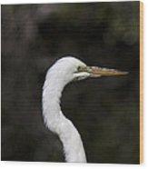 Portrait Of An Egret Wood Print