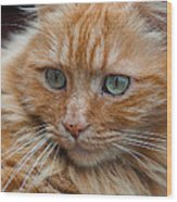 Portrait Of An Orange Kitty Wood Print